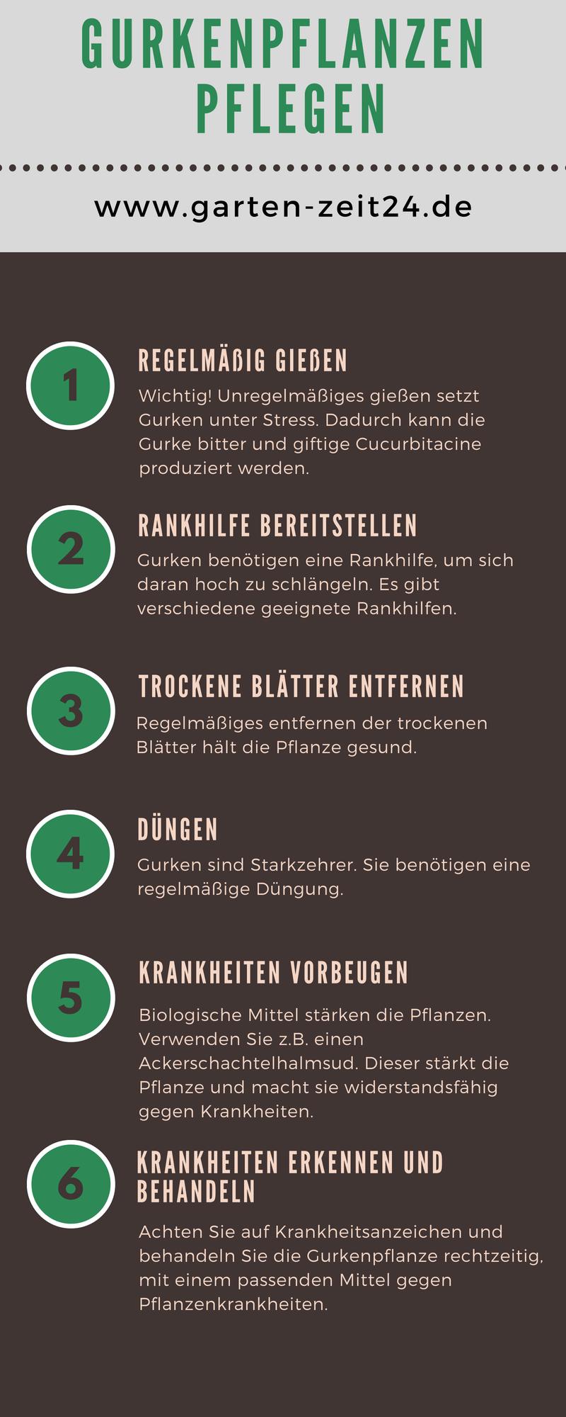 Infografik Gurkenpflanzen pflegen