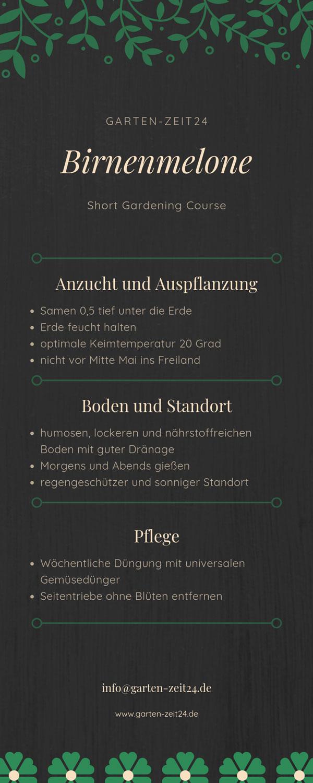 Birnenmelone Infografik Anbau und Pflege