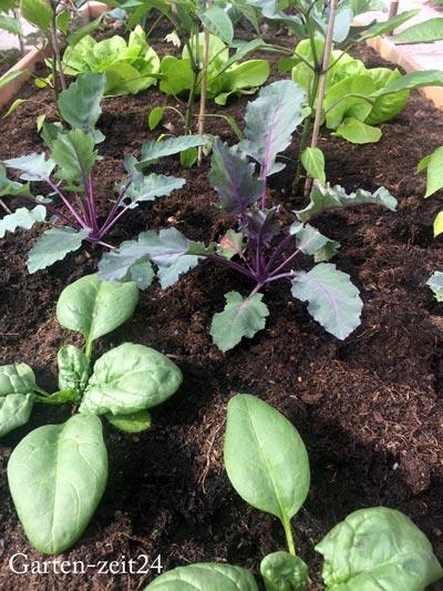 Verschiedene junge Gemüsepflanzen aus Bio-Saatgut gezogen