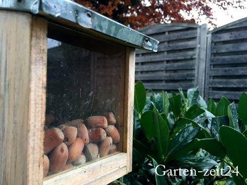 Futterstation Eichhörnchen im Garten