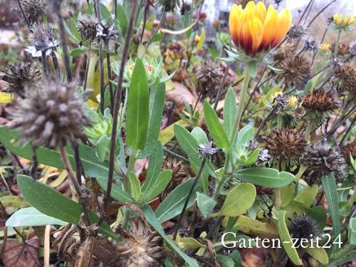 Blumen mit belassenen Blütenständen