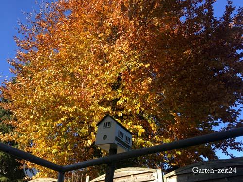 Vogelhaus im Herbst