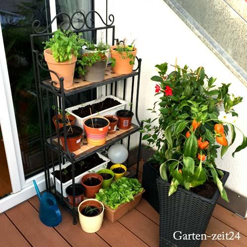 Gemüse anbauen am Balkon