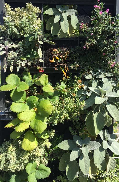 Vertical Gardening mit Kräutern
