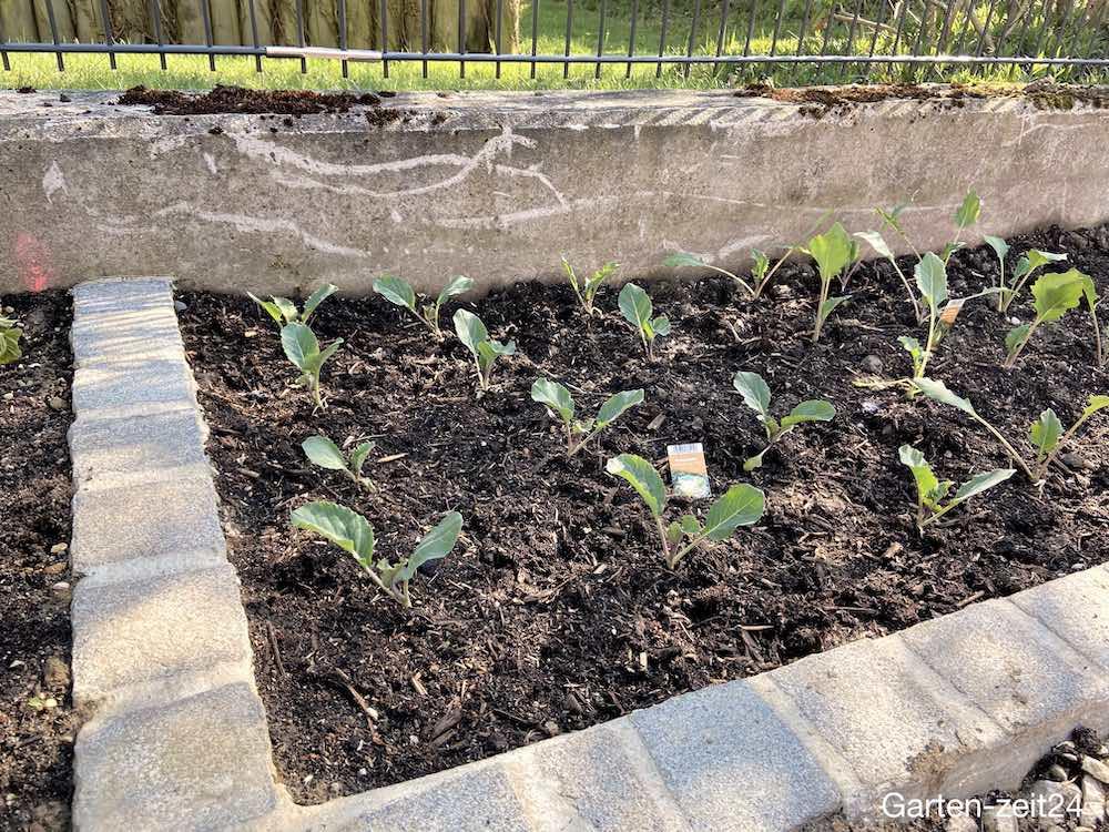 Gemüsebeet anlegen