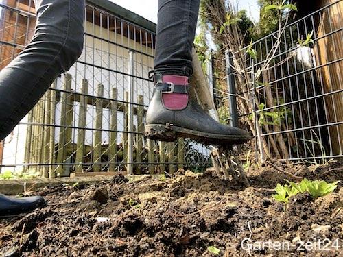 Boden für Gemüsebeet mit Grabegabel lockern
