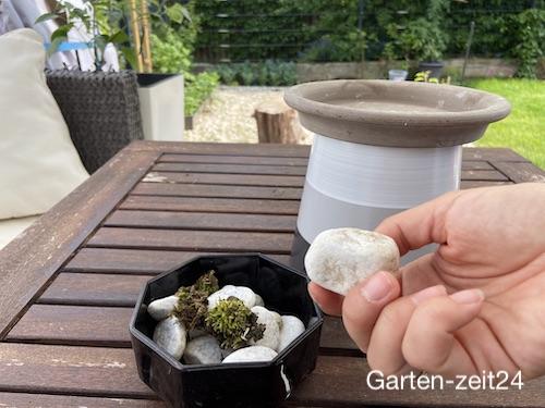 Steine und Moos für die Bienentränke